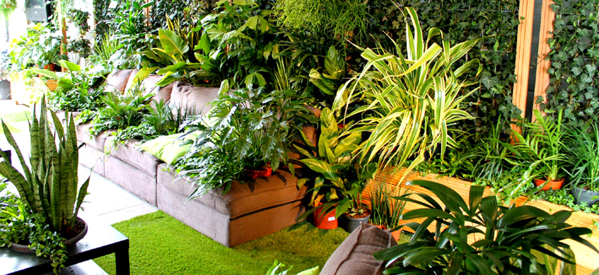 How To Use House Plants Refresh Your Interiors